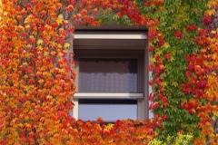 Autumn Sigma